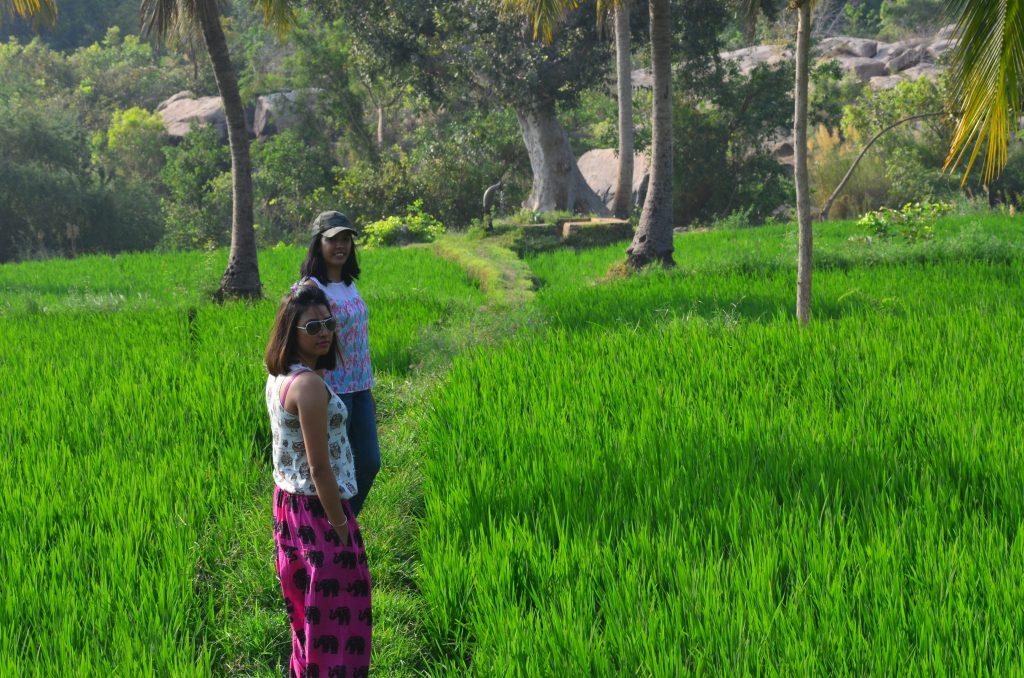 Hampi paddy fields