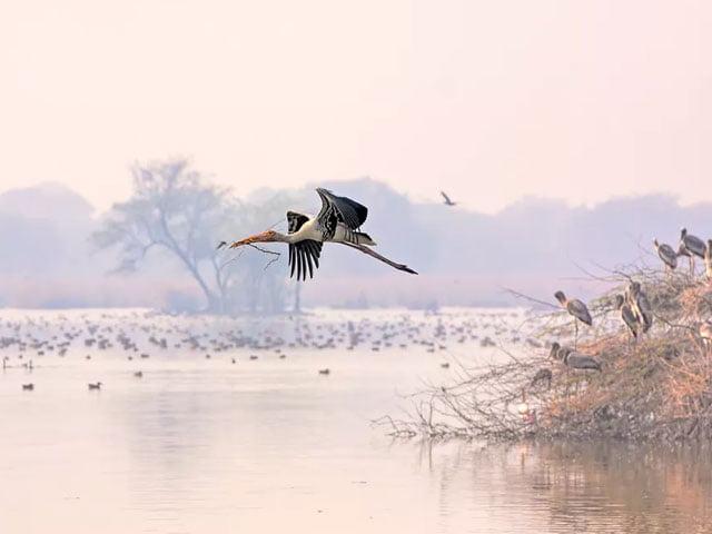 baratpur-bird-sanctuaries